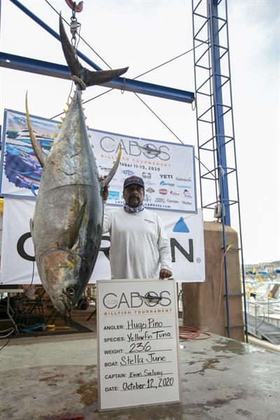 Image of a Yellowfin Tuna caught by Hugo  Pino on team Stella June at the 2020 Los Cabos Billfish Tournament